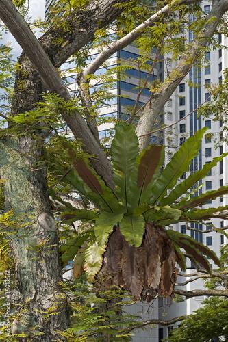 Fotografia, Obraz  Asplenium nidus