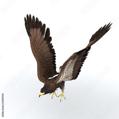 In de dag Eagle eagle illustration