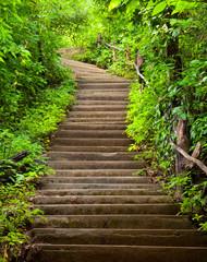 Panel Szklany Podświetlane Schody Stairway to forest