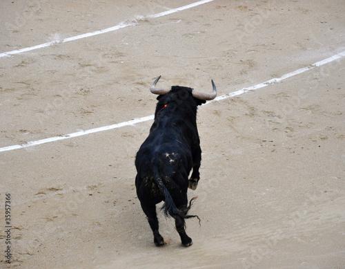 Poster Stierenvechten Bull
