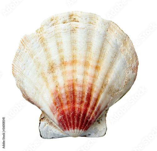 seashel sea life marine