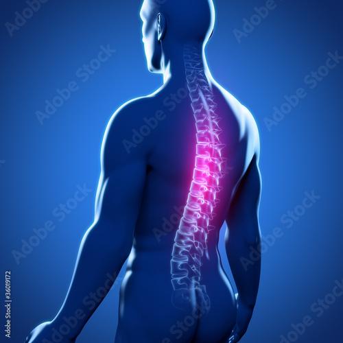 Fotografia  Männlicher Rücken mit Wirbelsäule