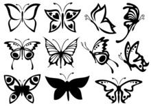 Butterflies Summer
