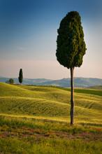 Tuscan Perspective