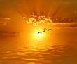 volando hacia los rayos de sol
