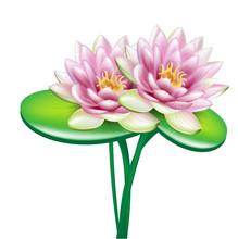 Two Open Lotus Flowers In Bouquet