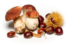 Funghi E Castagne Su Sfondo Bianco