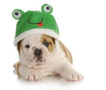 Puppy Frog