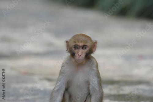 In de dag monkey 1