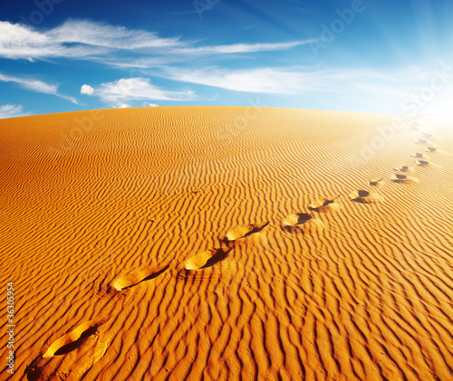 Poster de jardin Desert de sable Footprints on sand dune