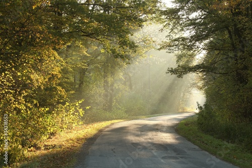 Papiers peints Foret brouillard Lane running through the autumn forest in misty October morning