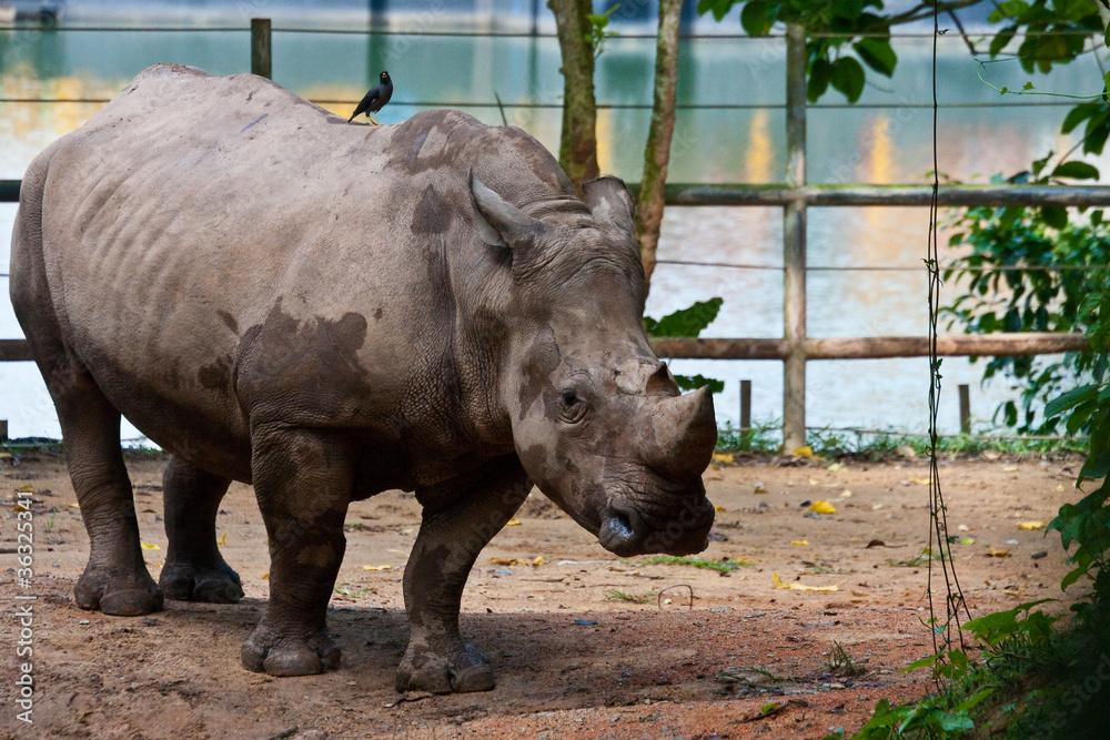 Fotografía  rhino