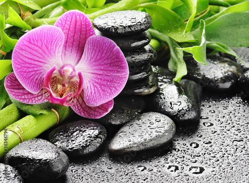 Plissee mit Motiv - pink orchid