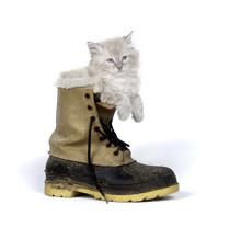 Cute Kitten Inside Of Boot