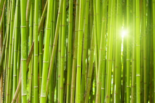 Foto op Canvas Bamboo Green bamboo forest