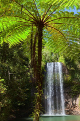 Fototapetatree fern and waterfall in tropical rain forest paradise