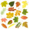Autumn leaf isolated over white background