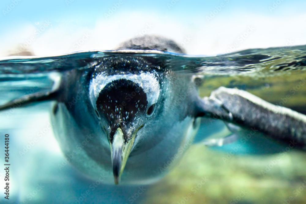 Penguin is under water