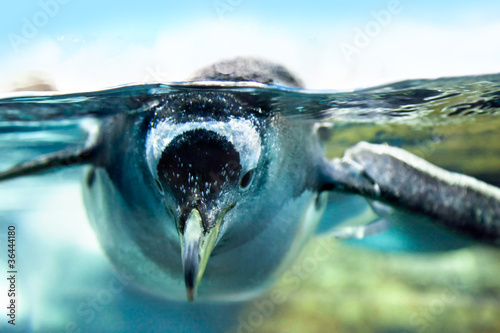 Deurstickers Pinguin Penguin is under water