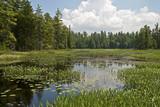 Wilderness marsh in Northeastern USA