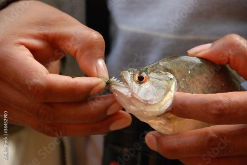 Fotobehang Vissen sharp piranha teeth