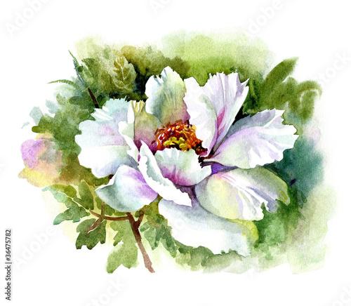 kolekcja-akwareli-kwiatowych-piwonia
