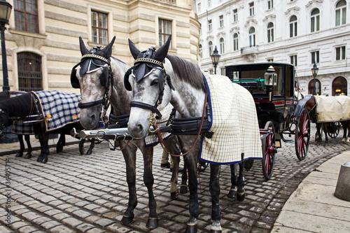 Valokuva  Horses in Vienna.