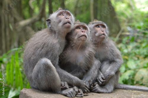 Foto op Plexiglas Aap Три обезьяны