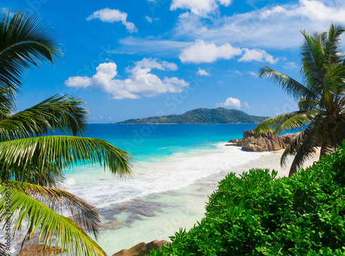 Foto Rollo Basic - Dream Palms Landscape (von alma_sacra)