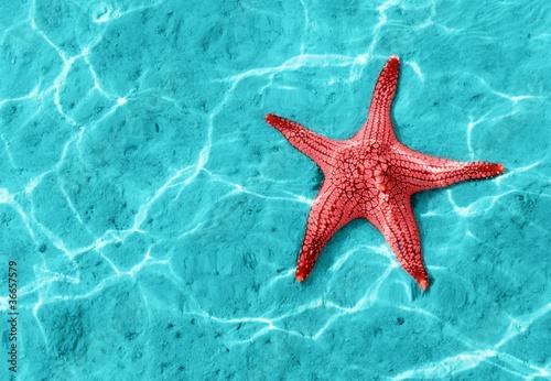 Fotografie, Obraz  starfish
