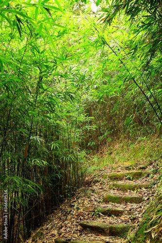 sciezka-lasu-bambusowego