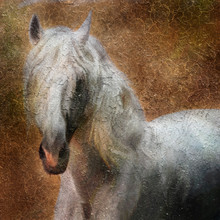Andalusian Horse Portrait. Simulation In Old Painting Style