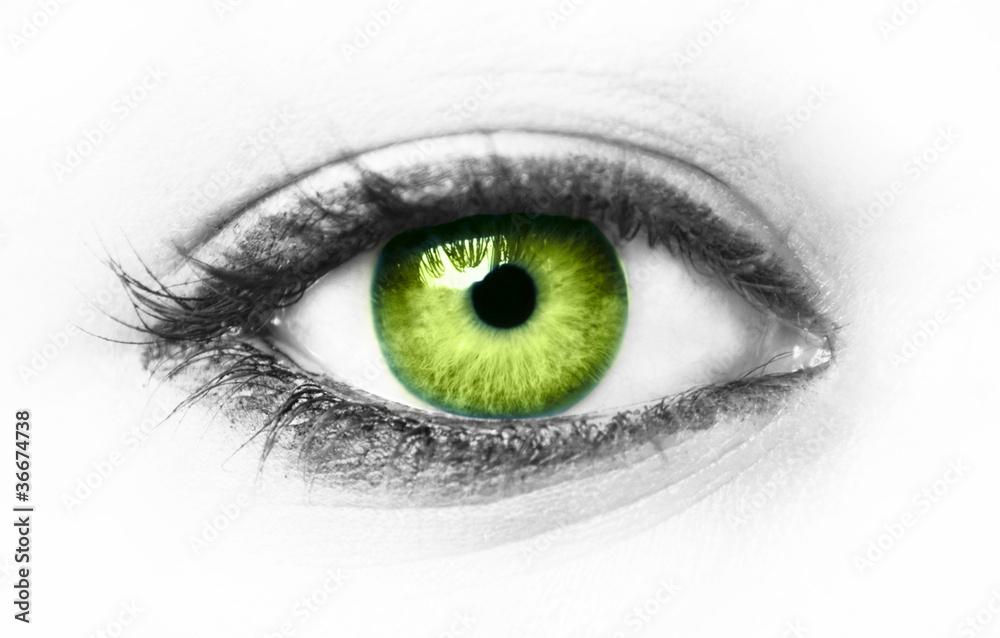 Fototapeta Green eye isolated