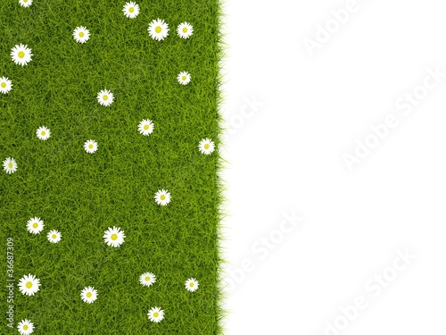 Grass with camolines isolated on white © Mikhail Mishchenko