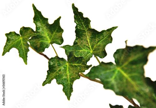 Fotografie, Obraz  roślinka