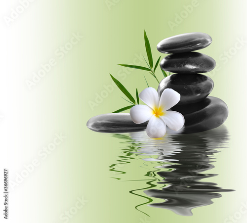 Poster frangipani and stones on a white background