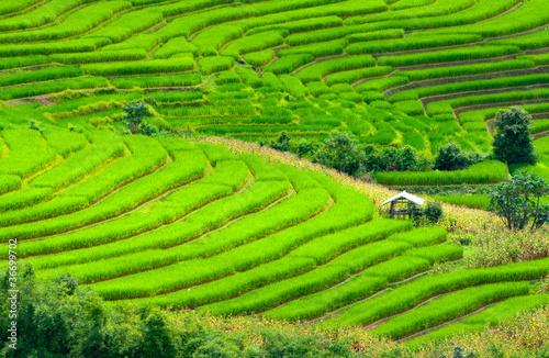 Foto auf Gartenposter Reisfelder Terraced rice fields in northern Thailand