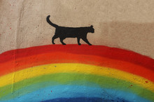 Black Cat Over The Rainbow