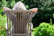 canvas print picture - grauhaarige Frau entspannt im Garten