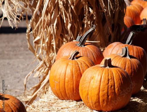 Fotografia, Obraz Orange Pumpkins sitting on straw
