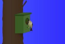 Ptaszek Siedzący Na Budce Lęgowej