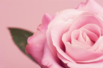Różowa róża z listkiem