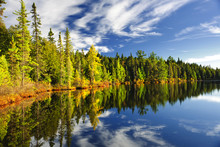 Forest Reflecting In Lake