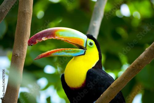Cadres-photo bureau Toucan Toucan