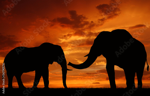 Poster Olifant silhouette elephant in the sunset