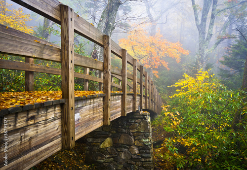 Fotografía Autumn Appalachian Trail Foggy Nature Blue Ridge Fall Foliage