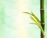 Fototapeta Sypialnia - bamboo branch over abstract background