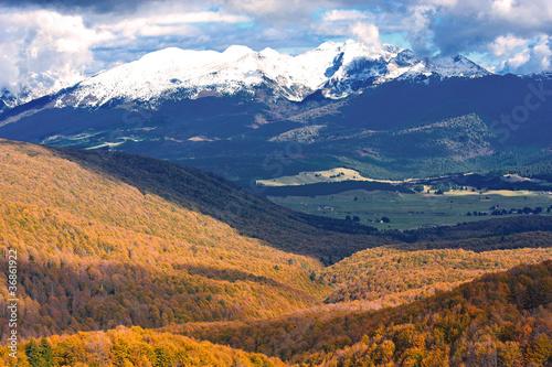 bosco del cansiglio 433 © peggy