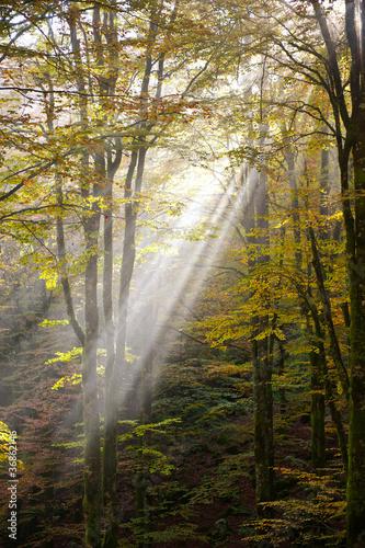 bosco del cansiglio 423 © peggy