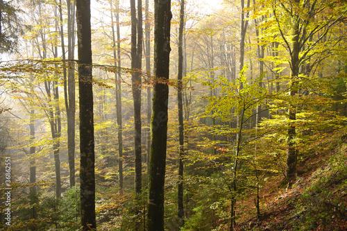 bosco del cansiglio 426 © peggy